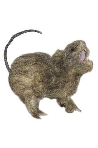 Rotte - Naturlig størrelse